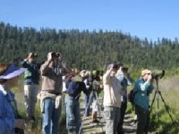 Birders looking at birds at Camp Creek in Orleans.