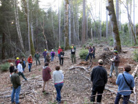 Nearly 50 participants went to the woods to talk about how they would treat forest fuels given the set of six shared values the group had agreed to the year prior during the Western Klamath Restoration Partnership's first meetings. The Partnership began in 2013 to build bridges between the antagonists of the so-called Timber Wars and continues to meet to prepare forest management plans./Photo by Will Harling, Mid Klamath Watershed Council.
